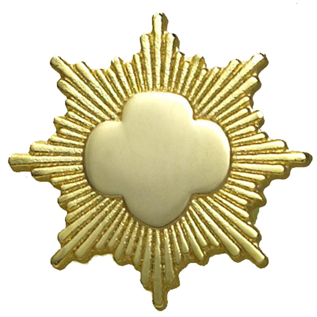 Gold Award Pin